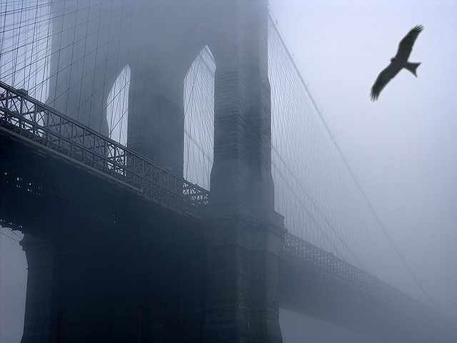 Brooklyn Eagle by Gary H. Splelvogel
