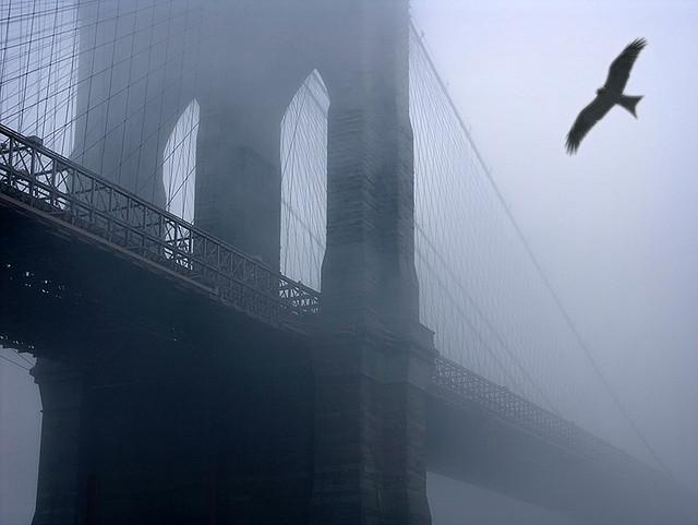 Brooklyn Eagle by Gary H. Splelvogel