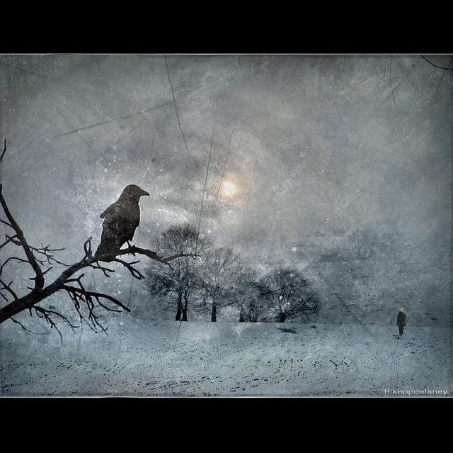 H. Koppdelaney raven image
