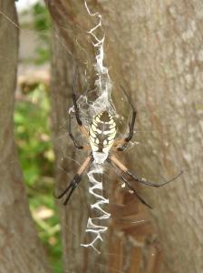 Zippity my garden spider